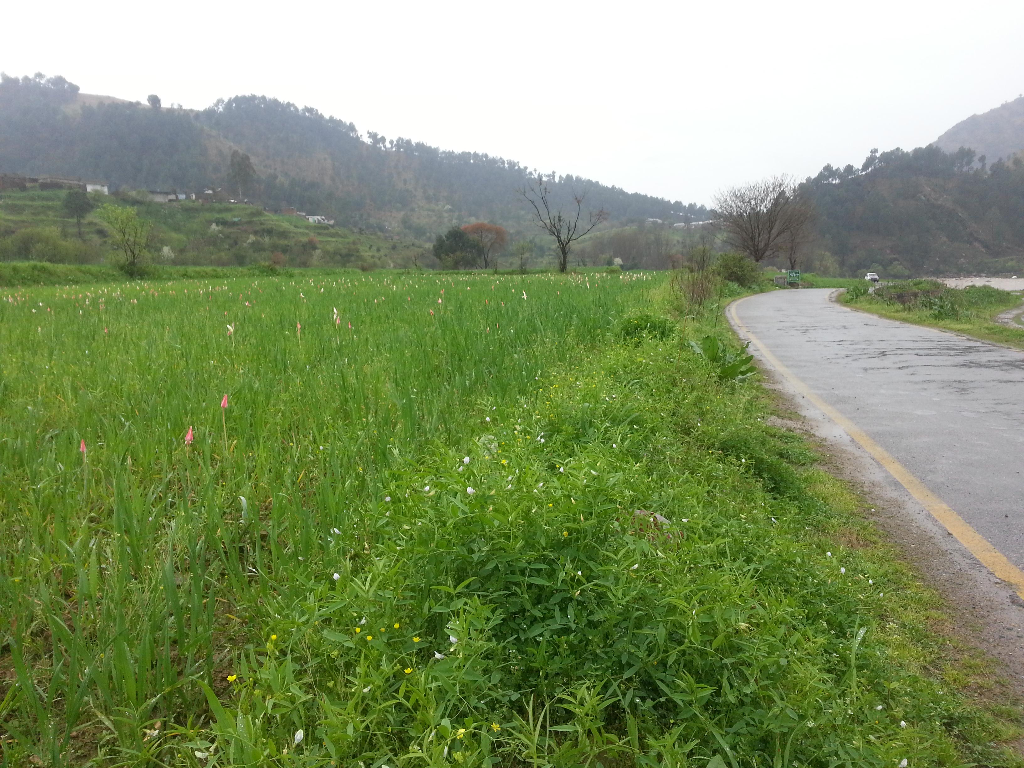 Ghanttol flowers & Wet road