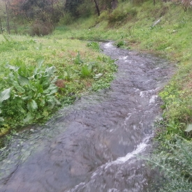 Natural water stream - another view